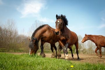 Pferde rennen ins erste Gras