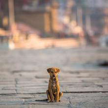 Little Dog Sitting Alone On Th...
