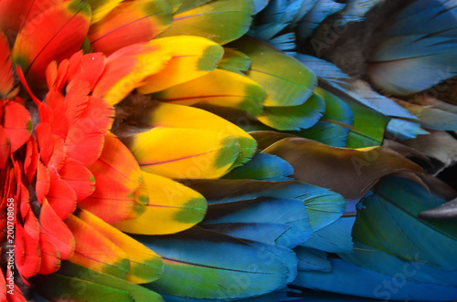 Photo Colorful plumage of a Macaw in the Amazon rainforest