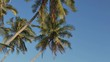 Exotic Palm Trees Wave under Wind Breath on Shore