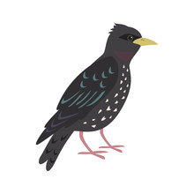 Cartoon Starling Icon On White...