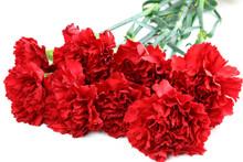 Beautiful Red Carnation Flower...