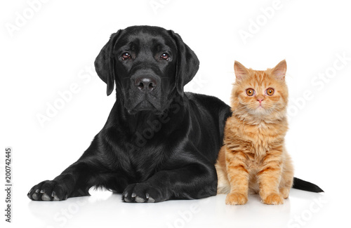 Photo  Cat and dog together