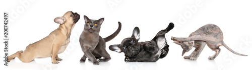 Fotografia, Obraz  Group of cats and dogs in yoga poses