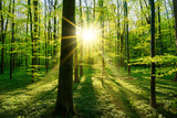 Fototapeta Natura - Beautiful forest in spring with bright sun shining through the trees