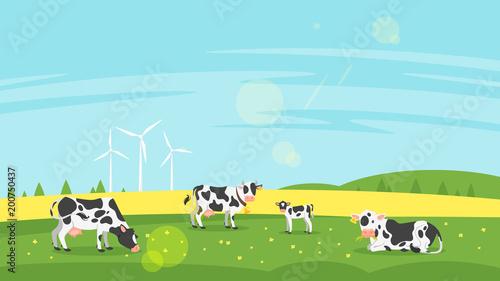 Foto cows graze in a field