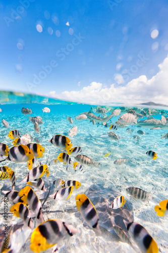 fototapeta na szkło Bora Bora underwater