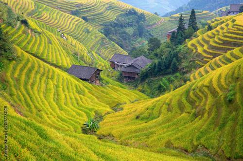 Garden Poster Rice fields Longji Rice Terraces