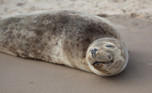 Smile Like I Do! Baby Seal Is So Cute