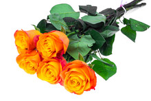 Exquisite Roses Isolated On Wh...
