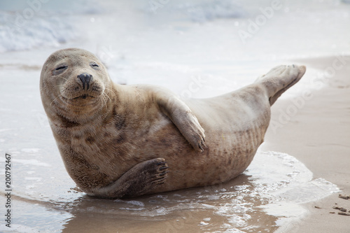 Fotomural  Smile like a baby seal