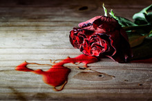 Dying Rose Bleeding On A Woode...