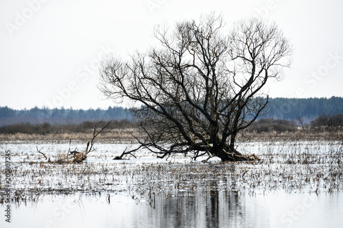 Fotobehang Lichtblauw Landscape dry old tree in the water in the middle of the swamp