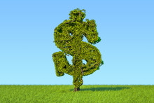 Money Tree In The Shape Of A D...