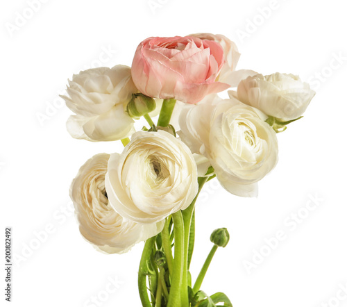 Fototapeta Beautiful ranunculus flowers on white background