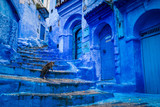 Fototapeta  - A cat climbs stairs on a blue painted street in the medina of Chefchaouen in Morocco