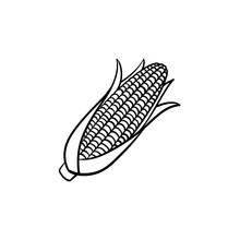 Corn Cob Vector Hand Drawn Out...