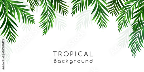 Tropical background with palm tree leaves decoration.
