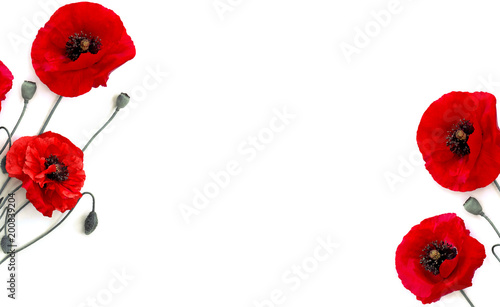 Frame of flowers red poppies (Papaver rhoeas, common names: corn poppy, corn rose, field poppy, red weed) on a white background with space for text. Top view, flat lay.
