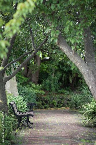 Valokuva  緑に囲まれたベンチ