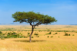 Fototapeta Sawanna - Landscape with nobody tree in Africa