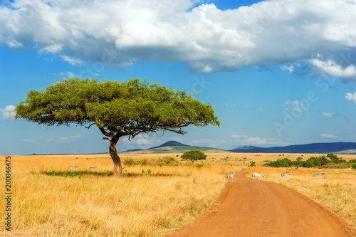 Aluminium Prints Blue Landscape with nobody tree in Africa