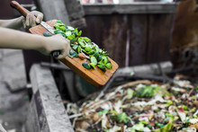 Child's Hands Throwing Out Kitchen Waste From The Vintage Cutting Board To The Garden Compost Heap For Recycling And Fertilizer