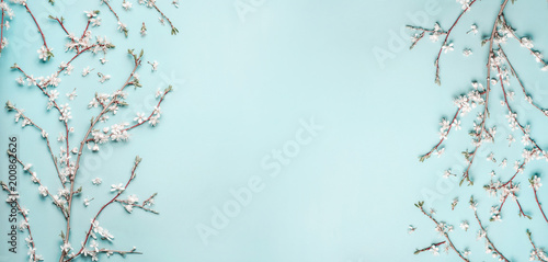 Fototapeta Beautiful Turquoise blue background with spring cherry blossom branches, top view, flat lay, frame