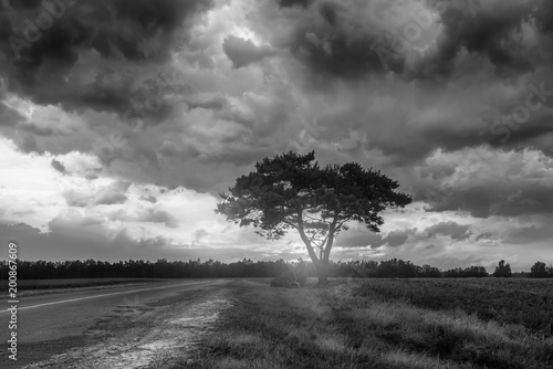 Black and white landscape with alone tree over stormy sky.