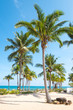 Landscape of coconut palm tree on tropical beach in summer. Summer background concept.