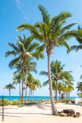 Poster Zanzibar Landscape of coconut palm tree on tropical beach in summer. Summer background concept.