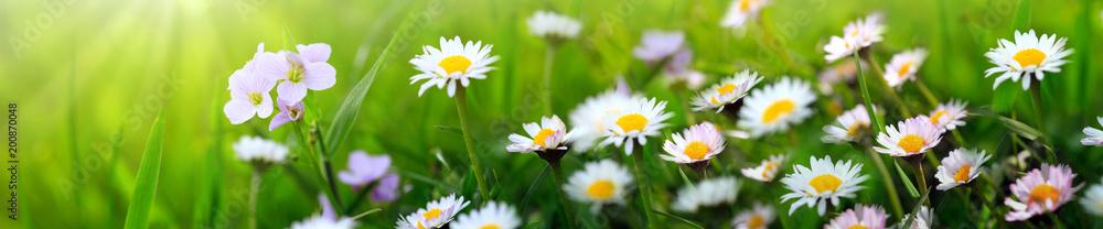 Fototapeta Spring flowers background.