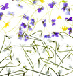 snowdrops and violets isolated on a white background - close up