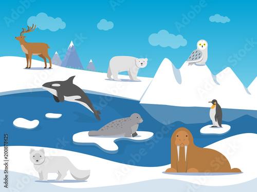 Keuken foto achterwand Lichtblauw Arctic landscape with different polar animals