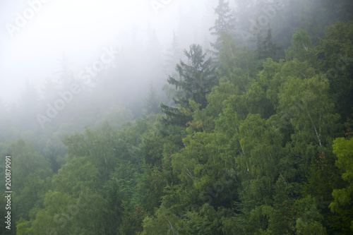 Photo sur Aluminium Jungle Dzika przyroda