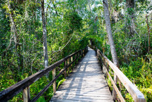 Florida Wetland, Wooden Path T...