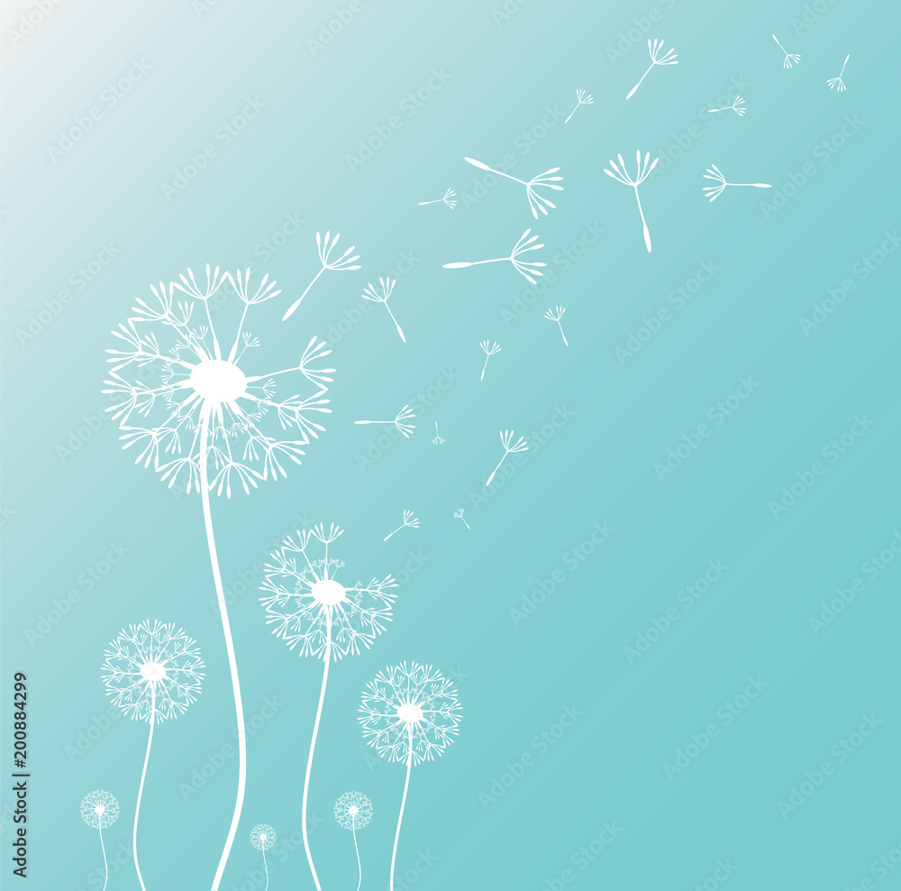 Fototapety, obrazy: Dandelion blowing silhouette with flying dandelion buds. Vector illustration