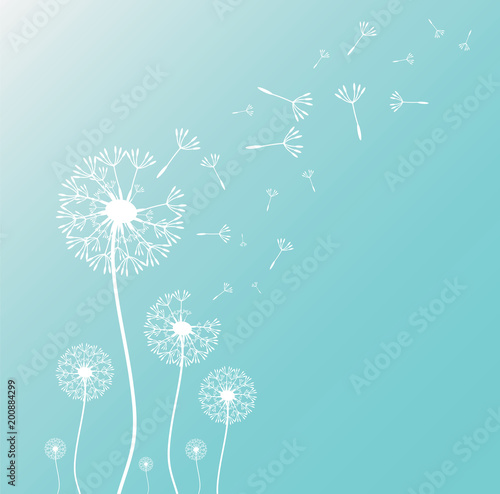 Valokuva Dandelion blowing silhouette with flying dandelion buds