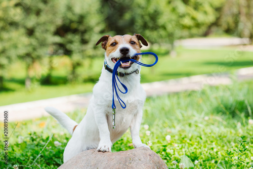 Crédence de cuisine en verre imprimé Chien Concept of happy morning walk with a dog at park