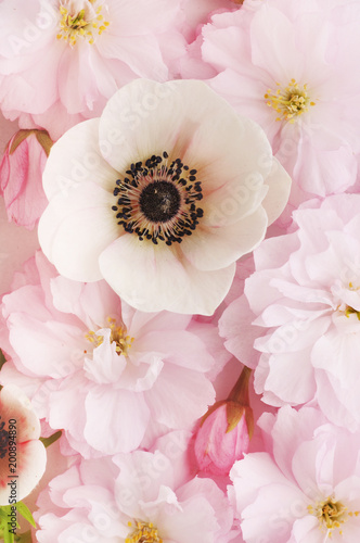 Keuken foto achterwand Bloemen floral background of cherry and anemone flowers