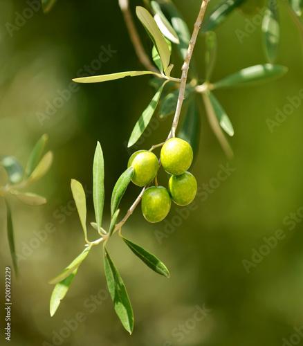 Aceitunas, primer plano, aceite de oliva