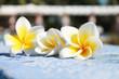 photo of a frangipani on the side 4