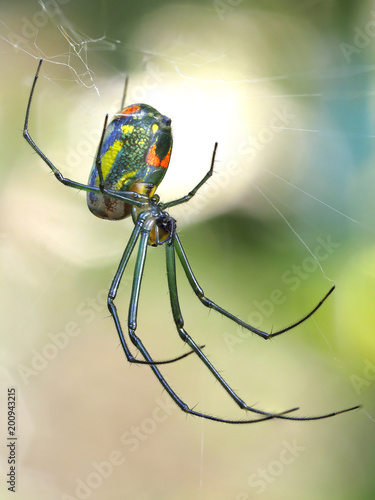 Focus Stacked Macro Image of a Tiny Orchard Spider and It's Web