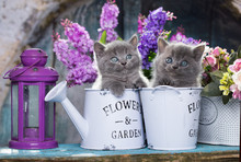 Kittens And Flowers