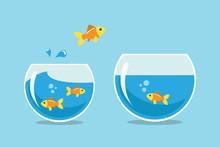 Golden Fish Jumping