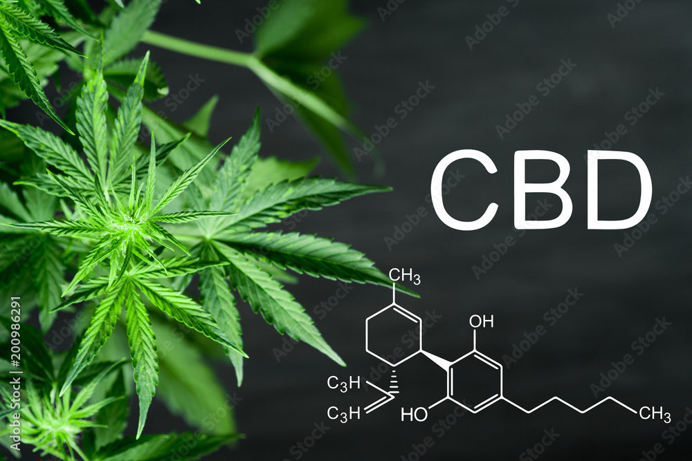 Fototapety, obrazy: CBN chemical formula Beautiful background of green cannabis flowers A place for copy space