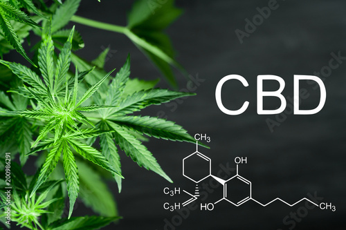 CBN chemical formula Beautiful background of green cannabis flowers A place for copy space