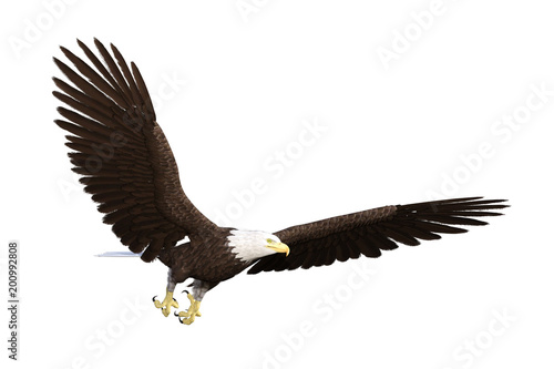 In de dag Eagle American bald eagle isolated on white, 3d render.