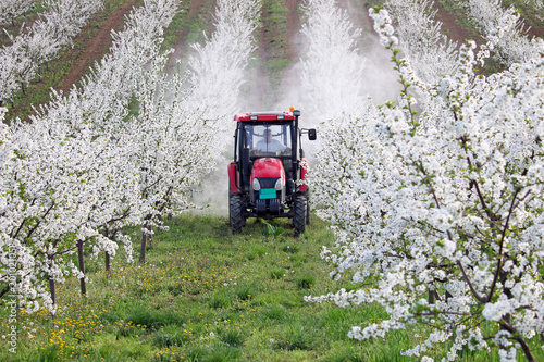 tractor sprays insecticide in cherry orchard agriculture Slika na platnu