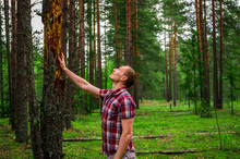 A Man Touches A Drying Tree In...